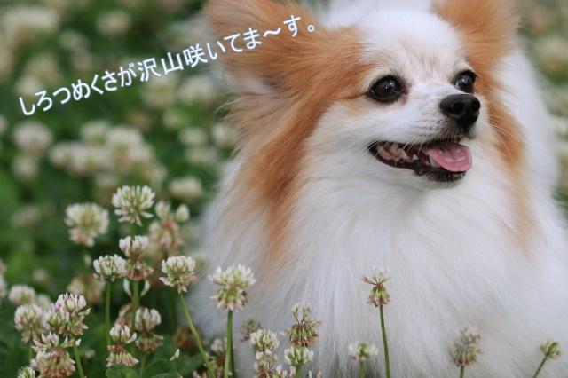 1_002.jpg