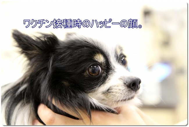 2IMG_3667.jpg