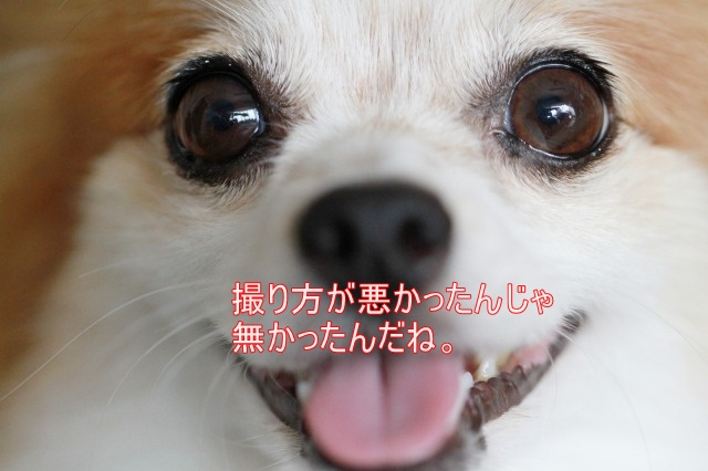 2IMG_7501.jpg