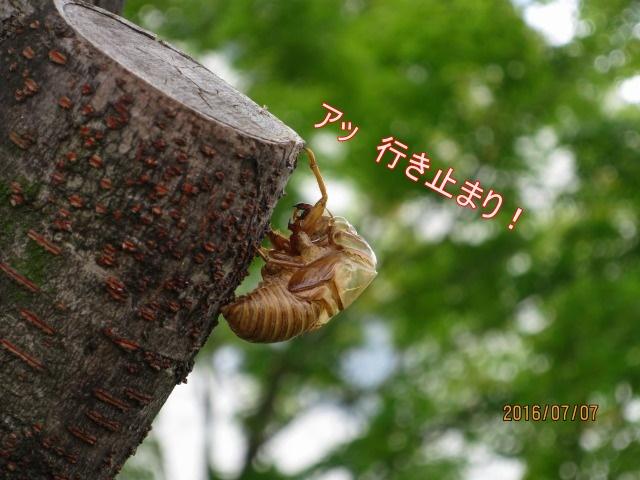 2IMG_9217.jpg