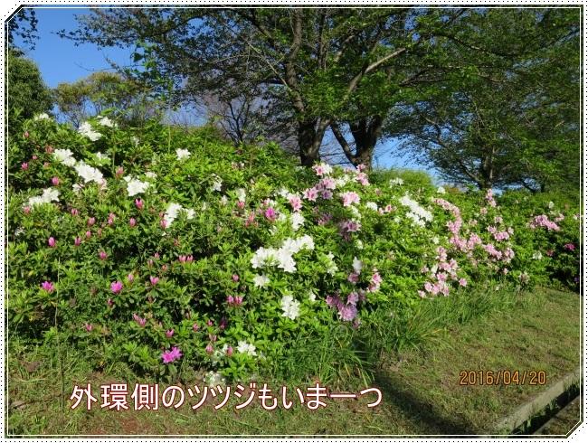 IMG_6459.jpg