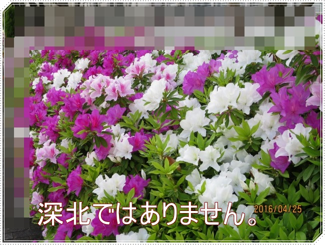 IMG_6674.jpg