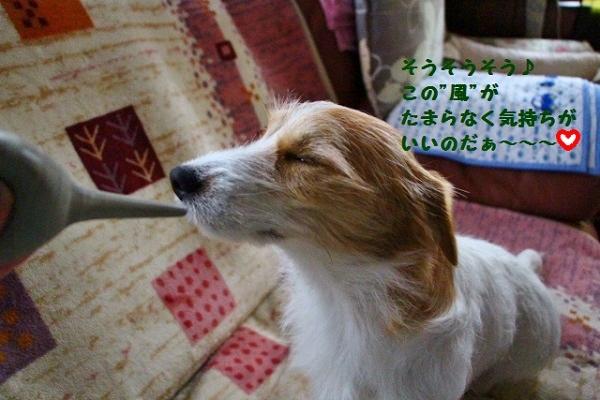 3_201604211218190d4.jpg