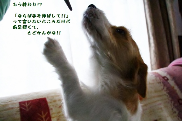 5_20160421121822ed4.jpg