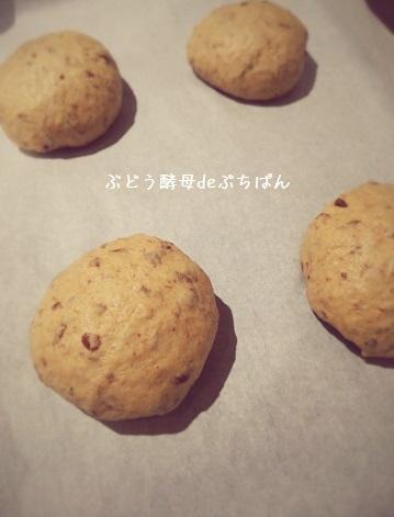 ぶどう酵母ぷちぱん①