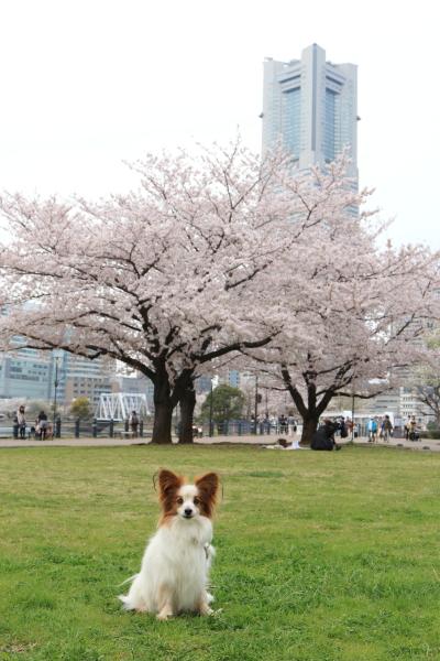 4月の犬@写真部 2016