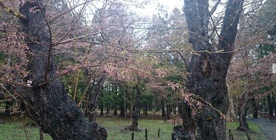 20160429旧標本木