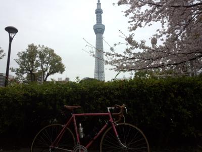 トウキョウ桜三昧