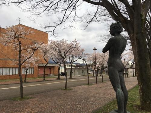 2016-04-08文化ホール桜