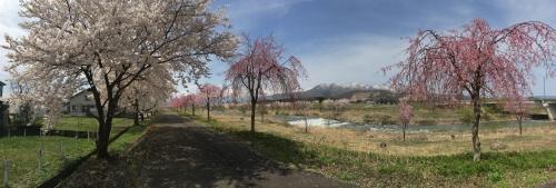2016-04-09 パノラマ