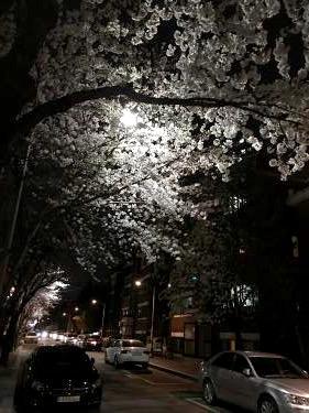 夜桜もまたいいものです。