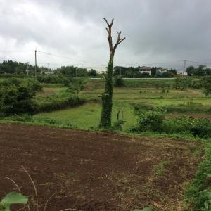 周辺の畑の様子