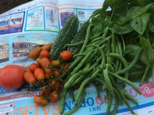 7月11日の収穫2