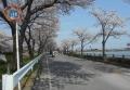 湖畔沿いの道路
