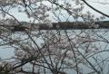 桜越しに見る取水塔