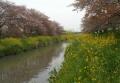 弁天橋付近の新河岸川