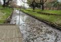 新河岸川の花筏①