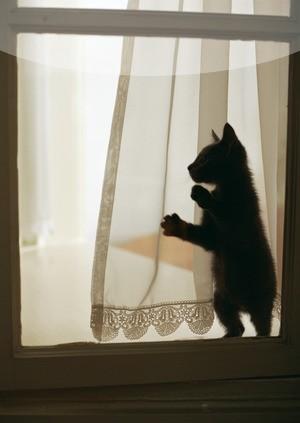 猫が顔を洗うと雨になる