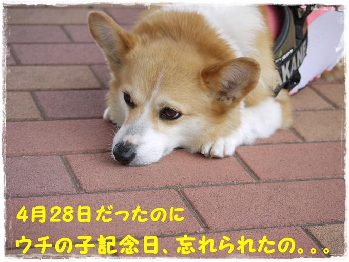 5-10P1500273.jpg