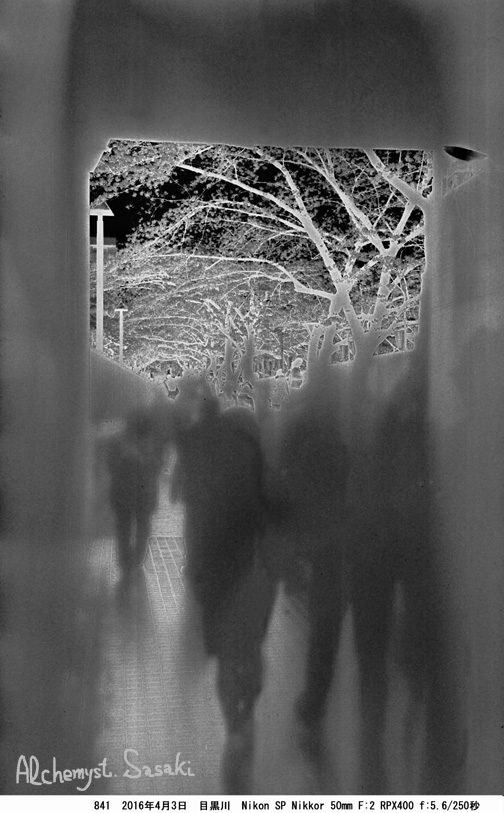 桜と幽霊841-31 Ⅲ Posi