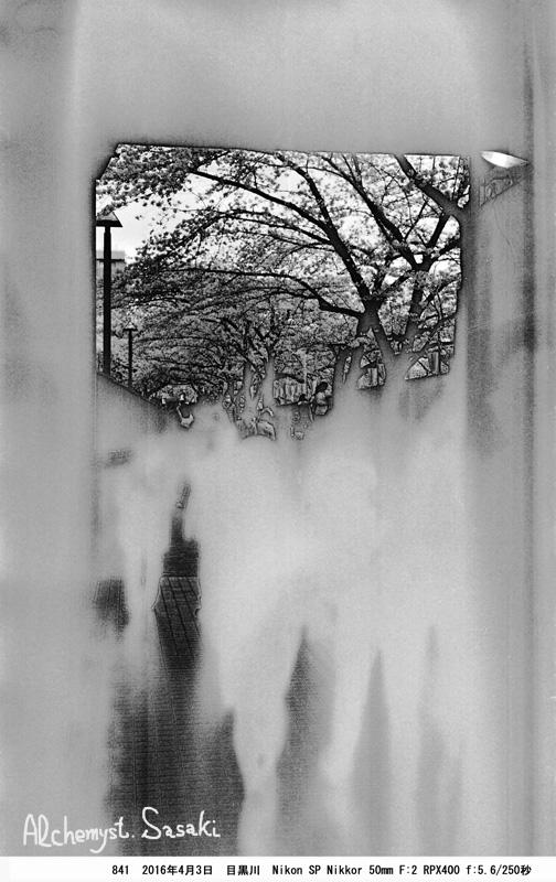 桜と幽霊841-31 Ⅱ