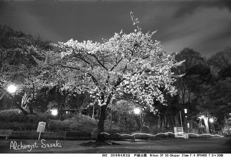 夜桜842-17