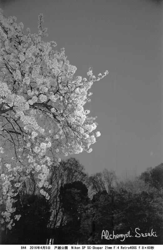 夜桜844-8