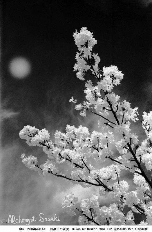桜845-30