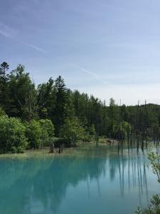 青い池 2016年7月