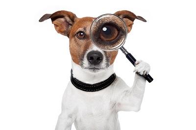 dog Investigation