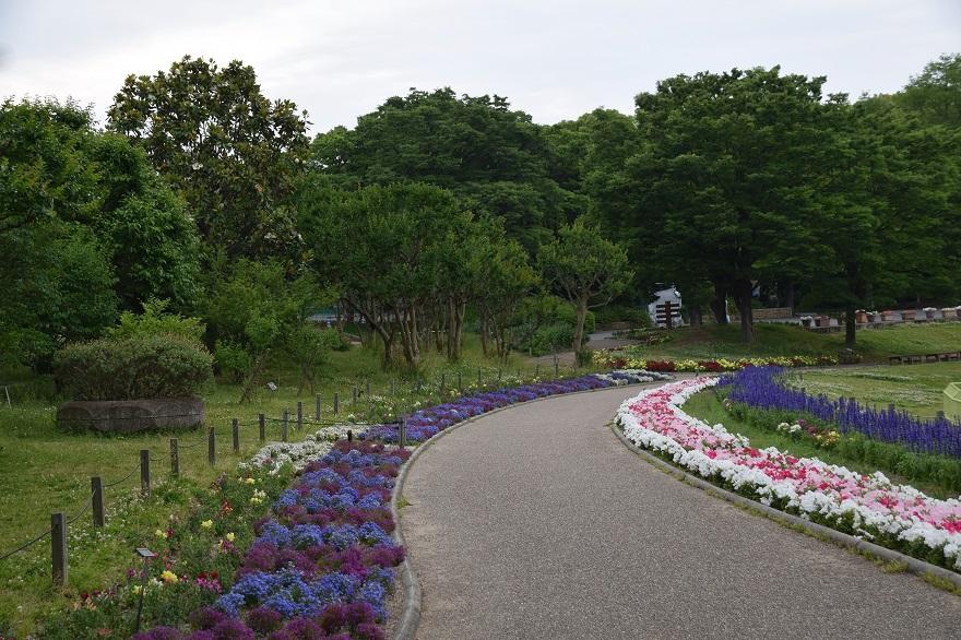 初夏の長居植物園 (1)