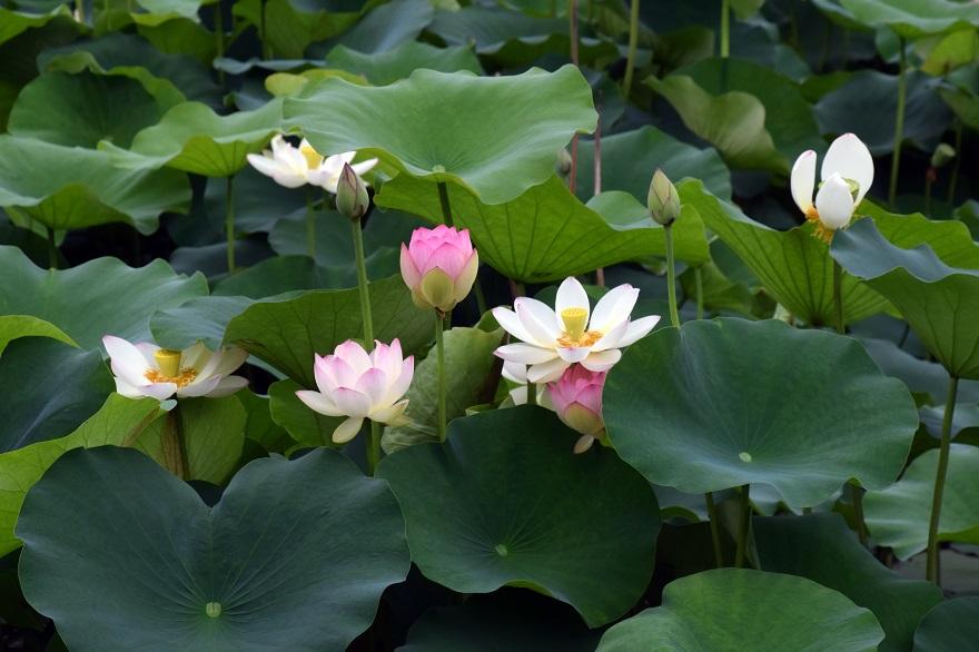 梅雨・長居植物園 (0)