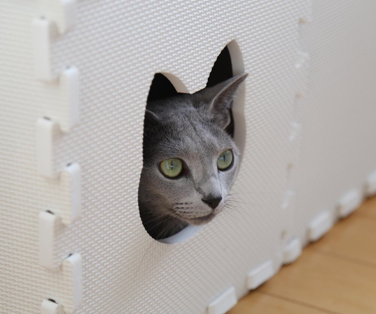 エマ猫トンネル
