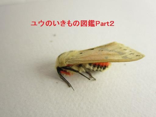 スジモンヒトリ1