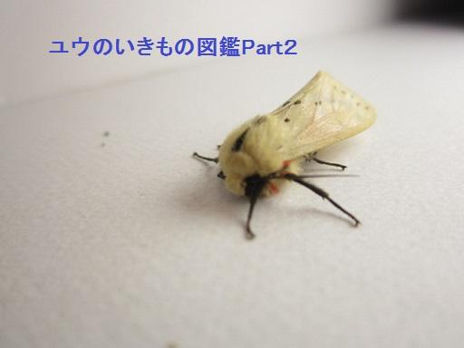 スジモンヒトリ5
