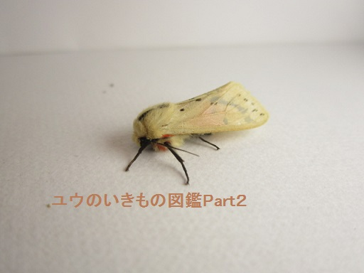 スジモンヒトリ6