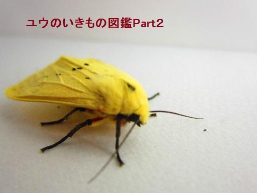 スジモンヒトリ8