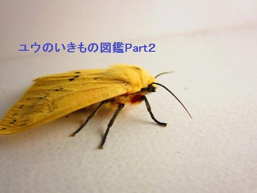 スジモンヒトリ10