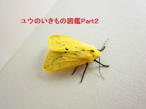 スジモンヒトリ11