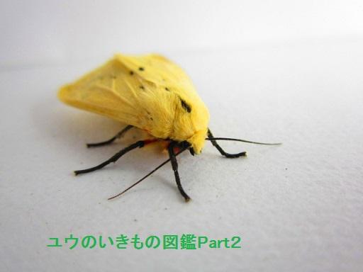 スジモンヒトリ12