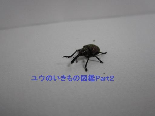 チョッキリ3