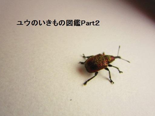 チョッキリ11