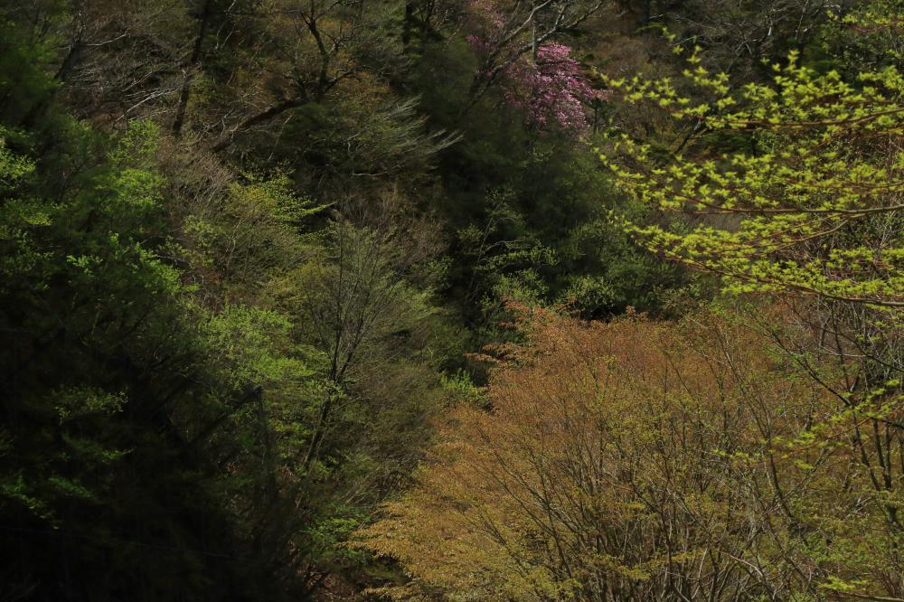 春色のハーモニー