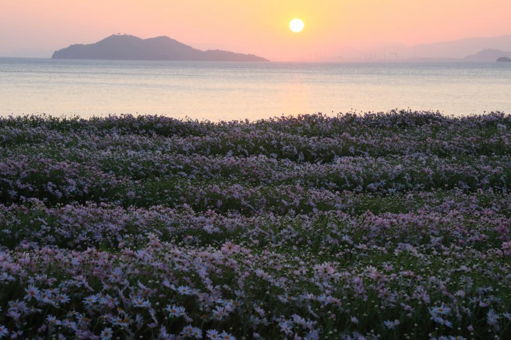 朝を迎える花畑