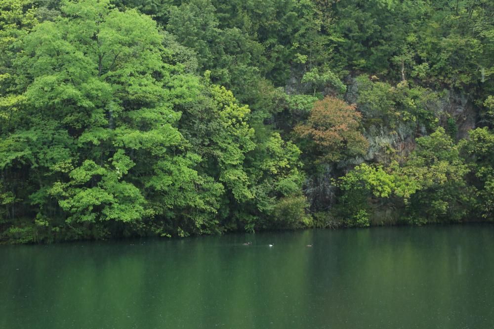 雨降りの池