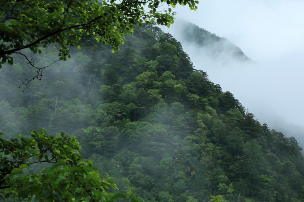 緑の森と霧