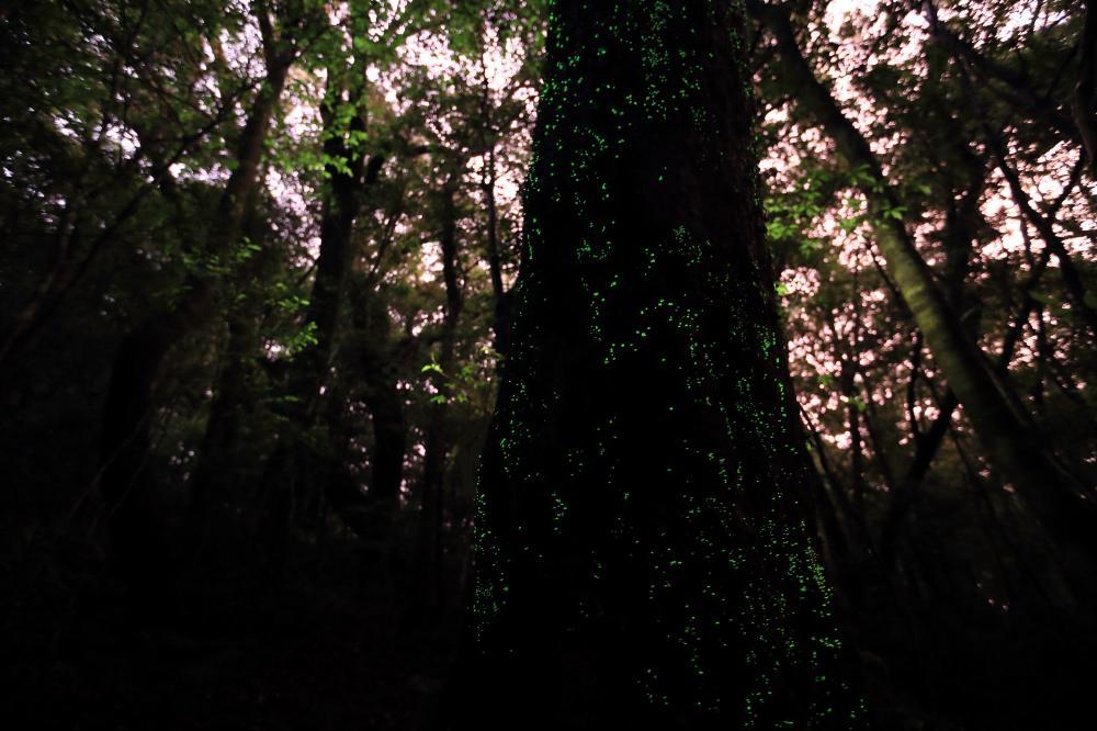 銀河のある森