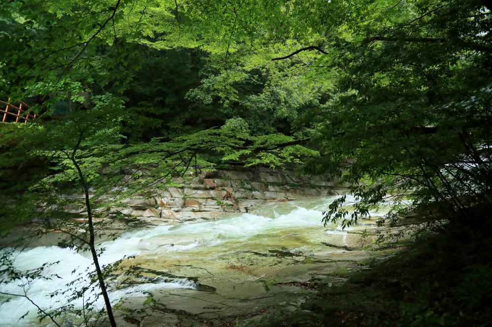 深緑を写す渓流