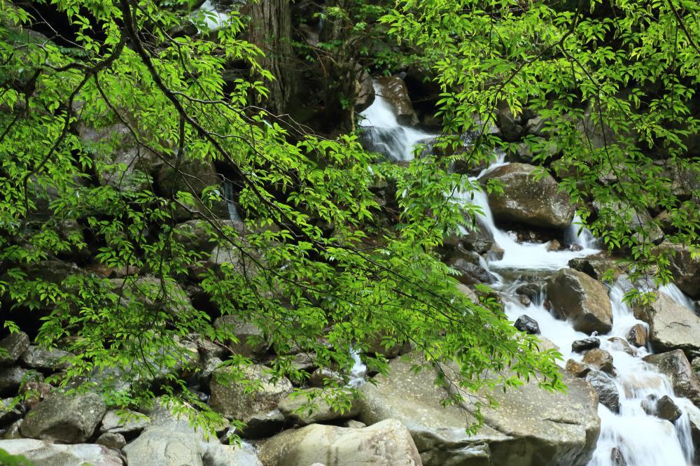 深緑と渓流