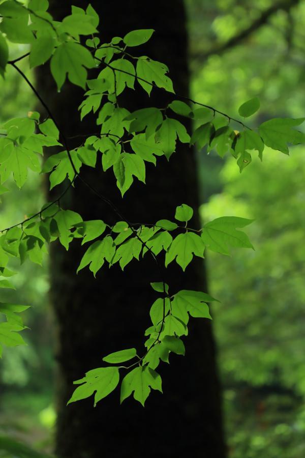 美しき深緑